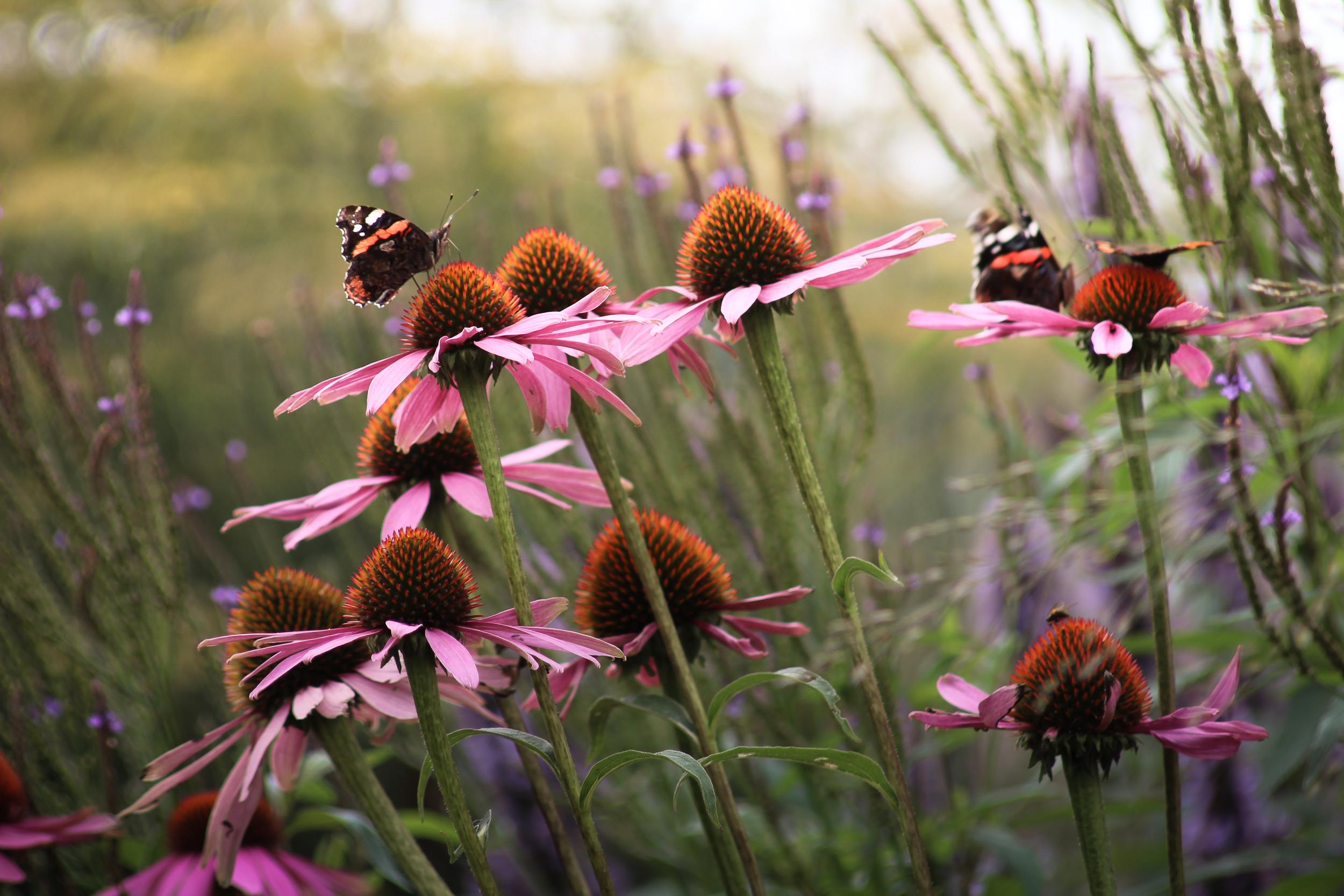 Vogels en vlinders in uw tuin